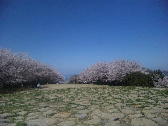 Kagawa Prefecture, ญี่ปุ่น: 山頂の桜