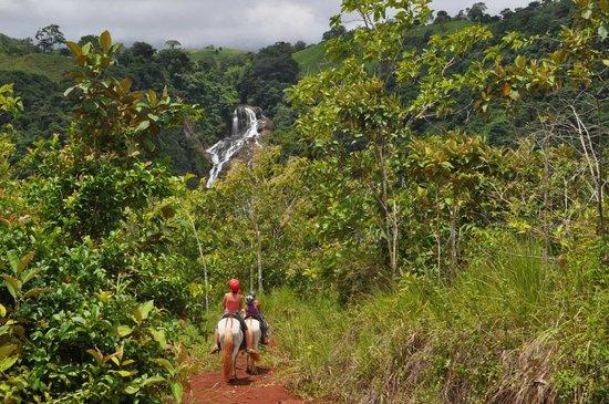 Hotel Paraiso Carlisa: Excursión a caballo hasta la cascada