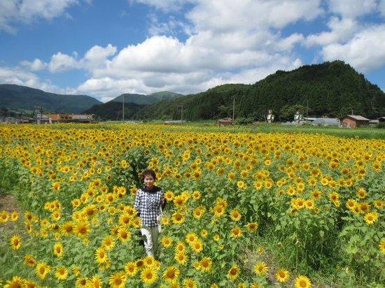 Kazeno Ie Michi-no-Eki: 昨年の写真
