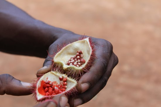 Zanzibar Spice Tour: Lipstick Fruit :)