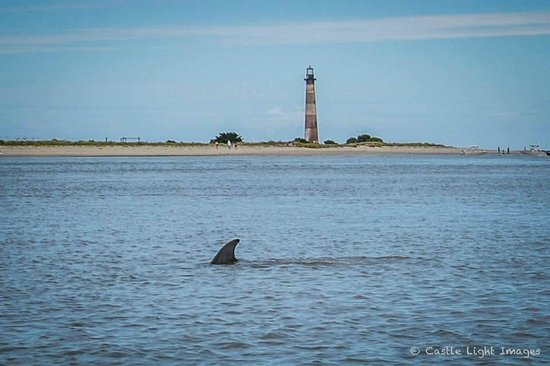 Flipper Finders Boat Sea Kayak Tour Co Dolphins Surrounding The Lighthouse On Morris