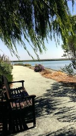 TownePlace Suites Redwood City Redwood Shores: bench under the willow tree