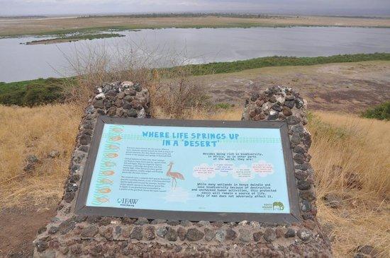 Observation Hill 3