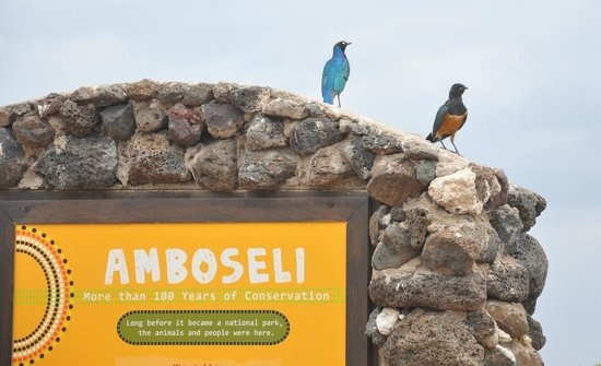 Observation Hill 5