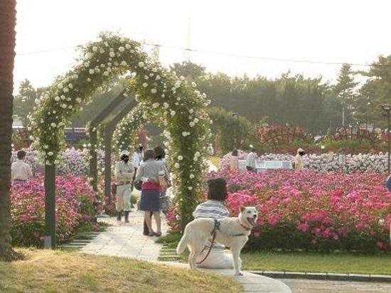 Hamadera Park: 花の展覧会。