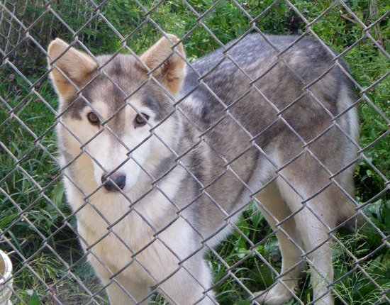 Wolf Sanctuary of PA (Lititz) - 2019 All You Need to Know