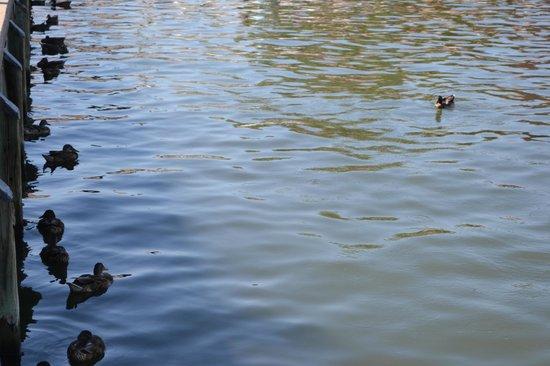Ego Alley : Ducks