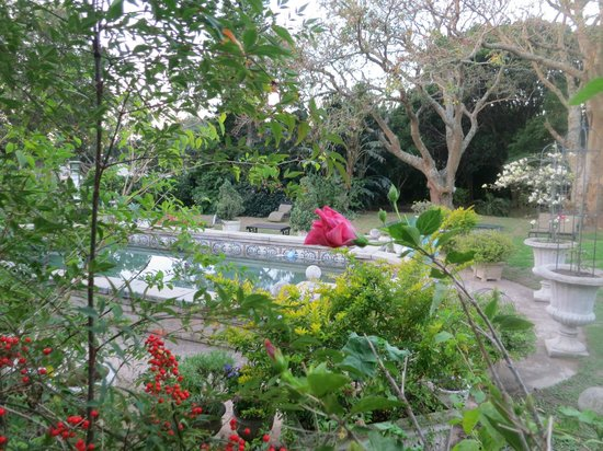 Forest Hall Guest House : View of the pool and part of the garden