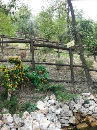 Capraia e Limite, Italie : Il parco
