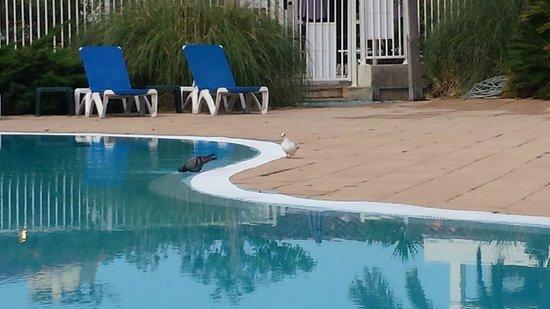 Soleil Vacances Hotel Saint Tropez : les pigeons qui vont a l hotel oups les clients