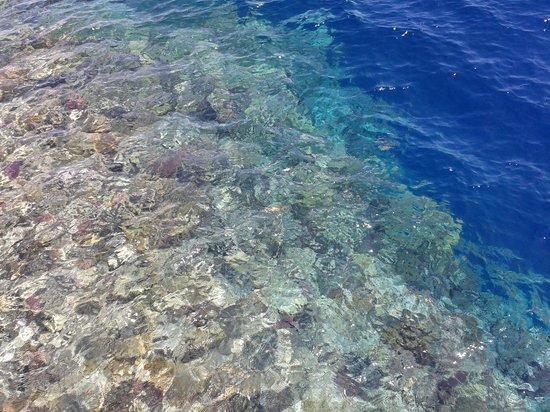 Flamenco Beach and Resort: barriera corallina vista dal pontile