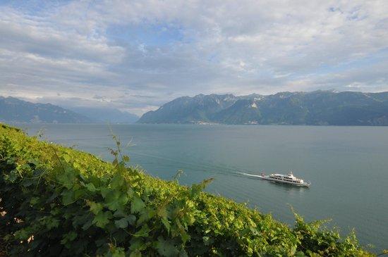 CGN : Une escapade le long des vignobles de Lavaux-UNESCO !