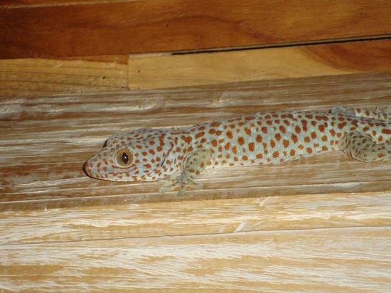 Sri Ratih Cottages: Gecko