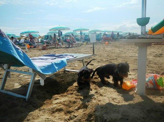 """Spiaggia 130 Riccione : beach dog """"spiaggi attrezzata per cani"""""""