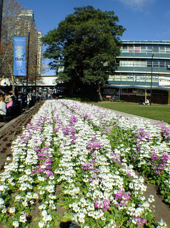 Novotel Sydney Parramatta: Local park 5 mins away