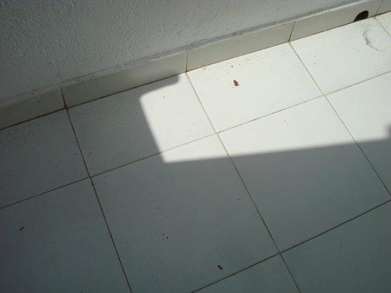 Morana Apartments: Balkon wurde nie geputzt, voller Vogelkot