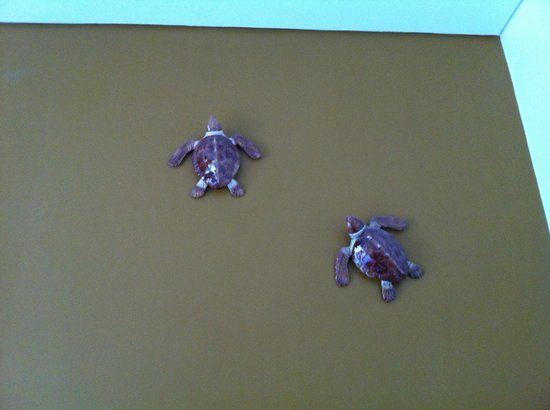 Spot Oporto Hostel: Turtles in our room :)