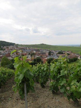 Le Phare de Vezernay : Vignoble près du phare de Vezernay
