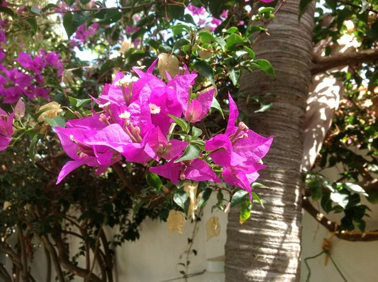 Paradera Park Aruba: Vibrant Flowers