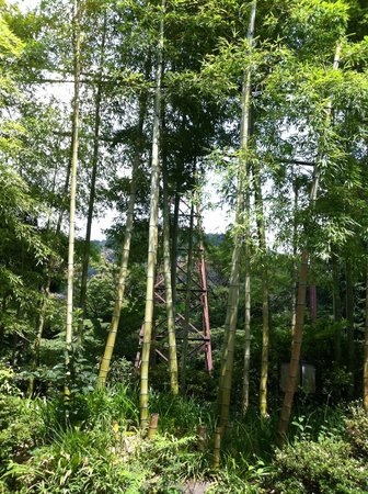 Shunkoso: Many bamboo trees in front of the hotel