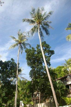 Panviman Resort - Koh Pha Ngan: Natur pur