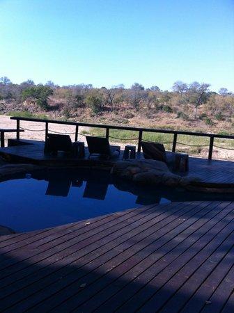 Jock Safari Lodge : piscina con vista savana
