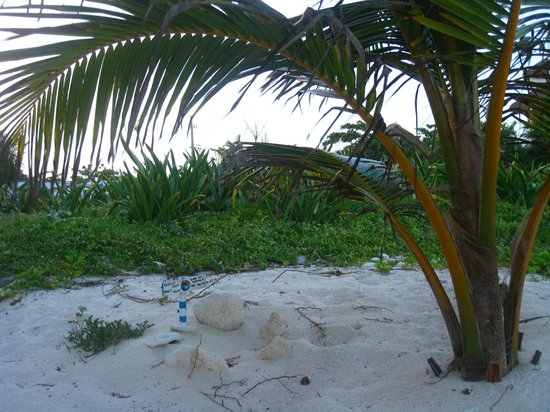 Del Sol Beachfront Hotel: turtle nest