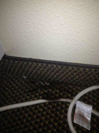 Candlewood Suites Lafayette River Ranch: Black mold on carpet and A/C power cord