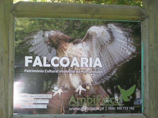 Tapada Nacional de Mafra: announcing the falcon show