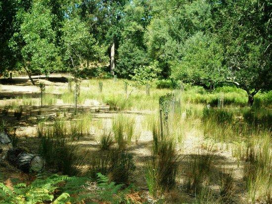 Tapada Nacional de Mafra: protection for new trees