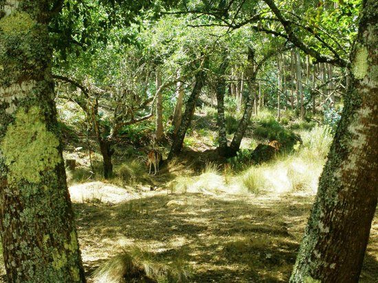 Tapada Nacional de Mafra: there are 2 deers in the picture...