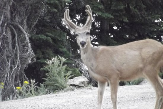 Green Jeep Tours: Deer in the road