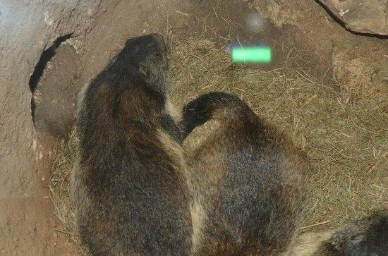 Marmottes Paradis: Paradiso delle marmotte