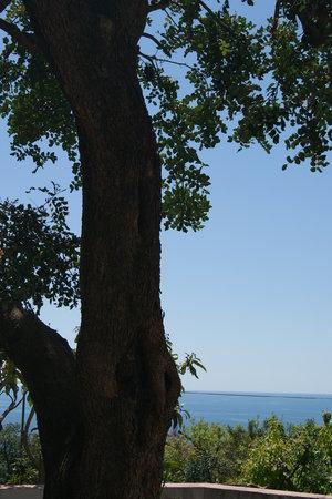 La Casa del Gelso: Gli alberi secolari che circondano la casa