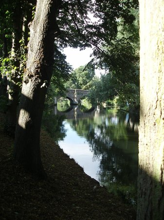 Riverside Walk: Trees across the River (at Bishopgate)