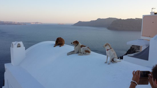 Kafourus Studios: Dogs cooling off on a rooftop in Oia