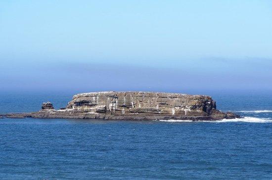 إن آت أوتر كريست: Otter Rock