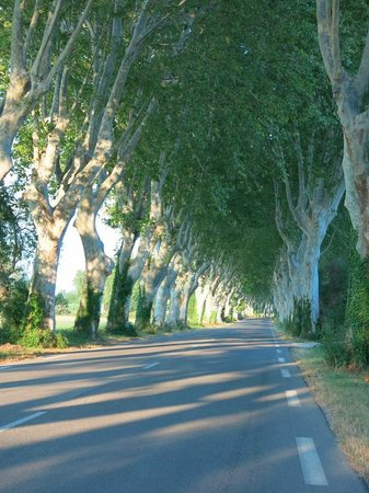 Mas Du Petit Grava : Beautiful countryside nearby