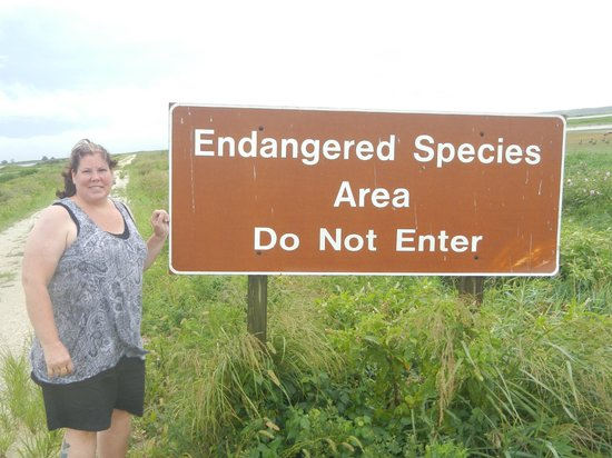 Edwin B. Forsythe National Wildlife Refuge: Gayle proving that she truly is one-of-a-kind!