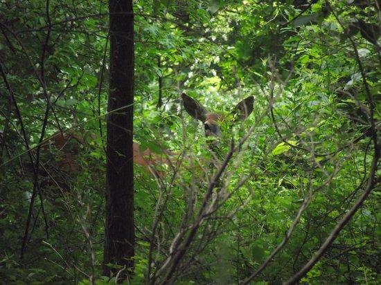 Tarrywile Park & Mansion: Deer on trail