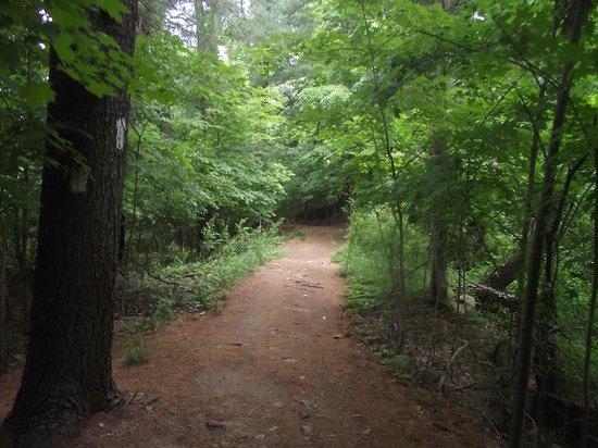 Tarrywile Park & Mansion: trail