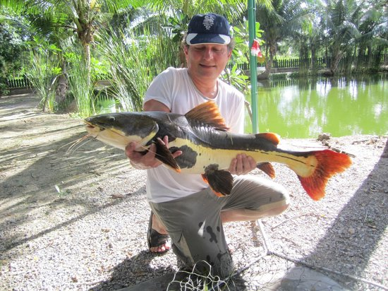 Hua Hin Fishing Lodge: 40 lb red tail cat fish