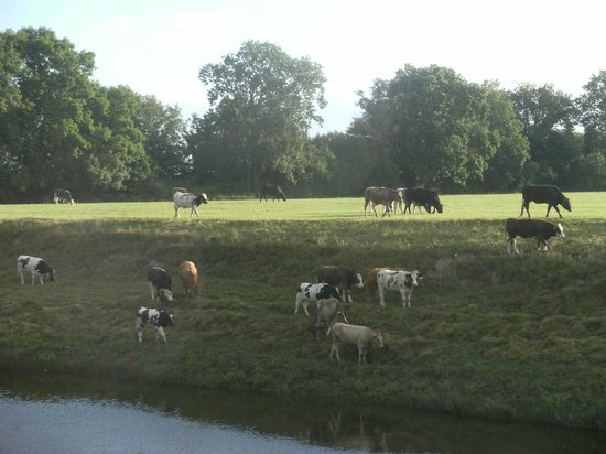 Brook House Farm Bed & Breakfast : Morning Wildlife