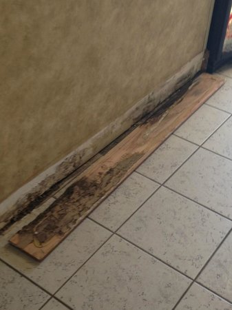 Wingate by Wyndham Oklahoma City Airport: Mold inside the baseboard outside the elevator