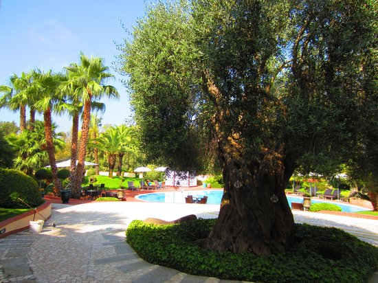 Hotel Arbatasar : Garden with swimming pool