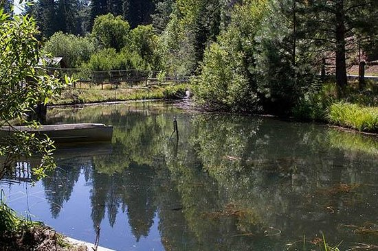 Canyon Ranch Resort of Sierraville: Cold running water enters the pond.