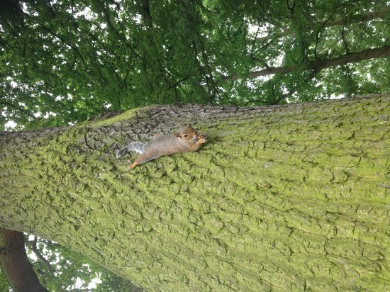Valentines Park: Squirrel Up A Tree