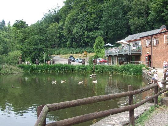 Dean Heritage Centre: Duck pond