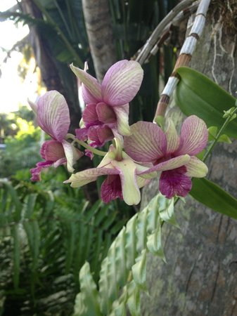 The Moorings Village and Spa: Orchid