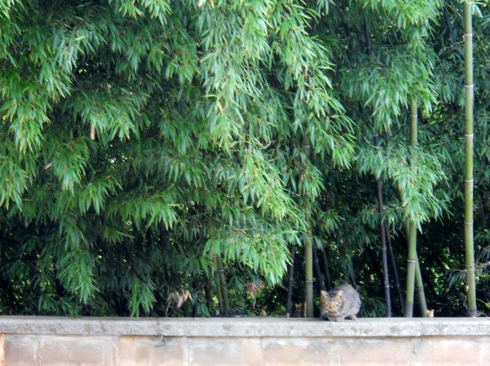 Monastery of the Holy Spirit: A resident cat
